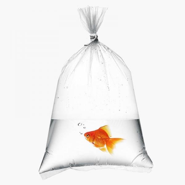 Torebki do transportu ryb