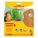 Sera Catappa Leaves